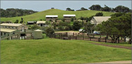 Ace Hi Riding Ranch - Lennox Head Accommodation