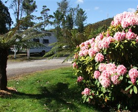 Zeehan Bush Camp  and Caravan Park - Lennox Head Accommodation