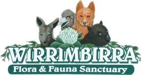 Wirrimbirra Sanctuary - Lennox Head Accommodation