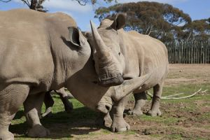 Monarto Zoo - Lennox Head Accommodation