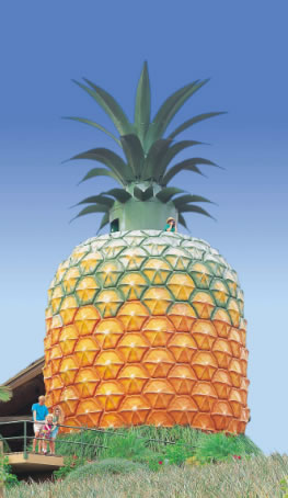 The Big Pineapple - Lennox Head Accommodation