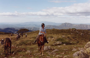 High Country Horses - Lennox Head Accommodation