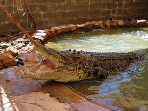 Wyndham Zoological Gardens and Crocodile Park - Lennox Head Accommodation
