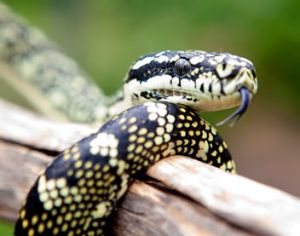 Reptile Encounters - Lennox Head Accommodation