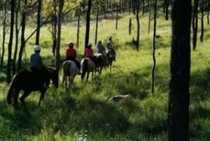 Hunter Valley Horse Riding and Adventures - Lennox Head Accommodation
