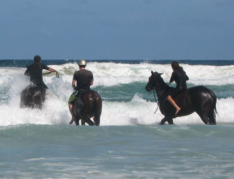 Pegasus Park Equestrian Centre - Lennox Head Accommodation