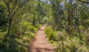 Mares Forest Creek walking track - Lennox Head Accommodation