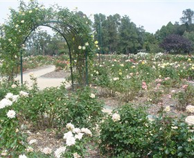 Victoria Park Rose Garden - Lennox Head Accommodation