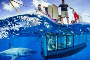 White Shark Tour with Optional Cage Dive from Port Lincoln - Lennox Head Accommodation