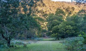 Griffins walking track - Lennox Head Accommodation