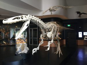 UNE Natural History Museum - Lennox Head Accommodation
