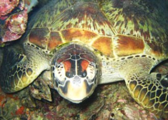 Adrenalin Snorkel and Dive - Lennox Head Accommodation