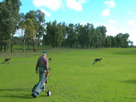 Coffin Bay Golf Club - Lennox Head Accommodation