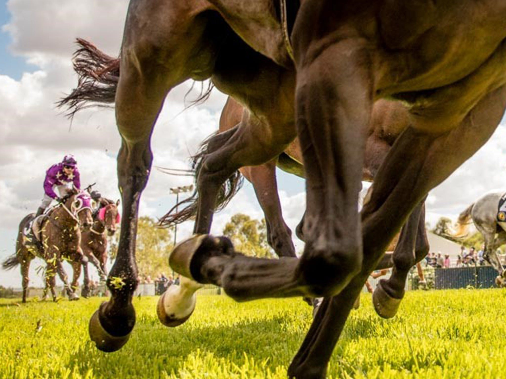 Night Markets and Race Day - Lennox Head Accommodation