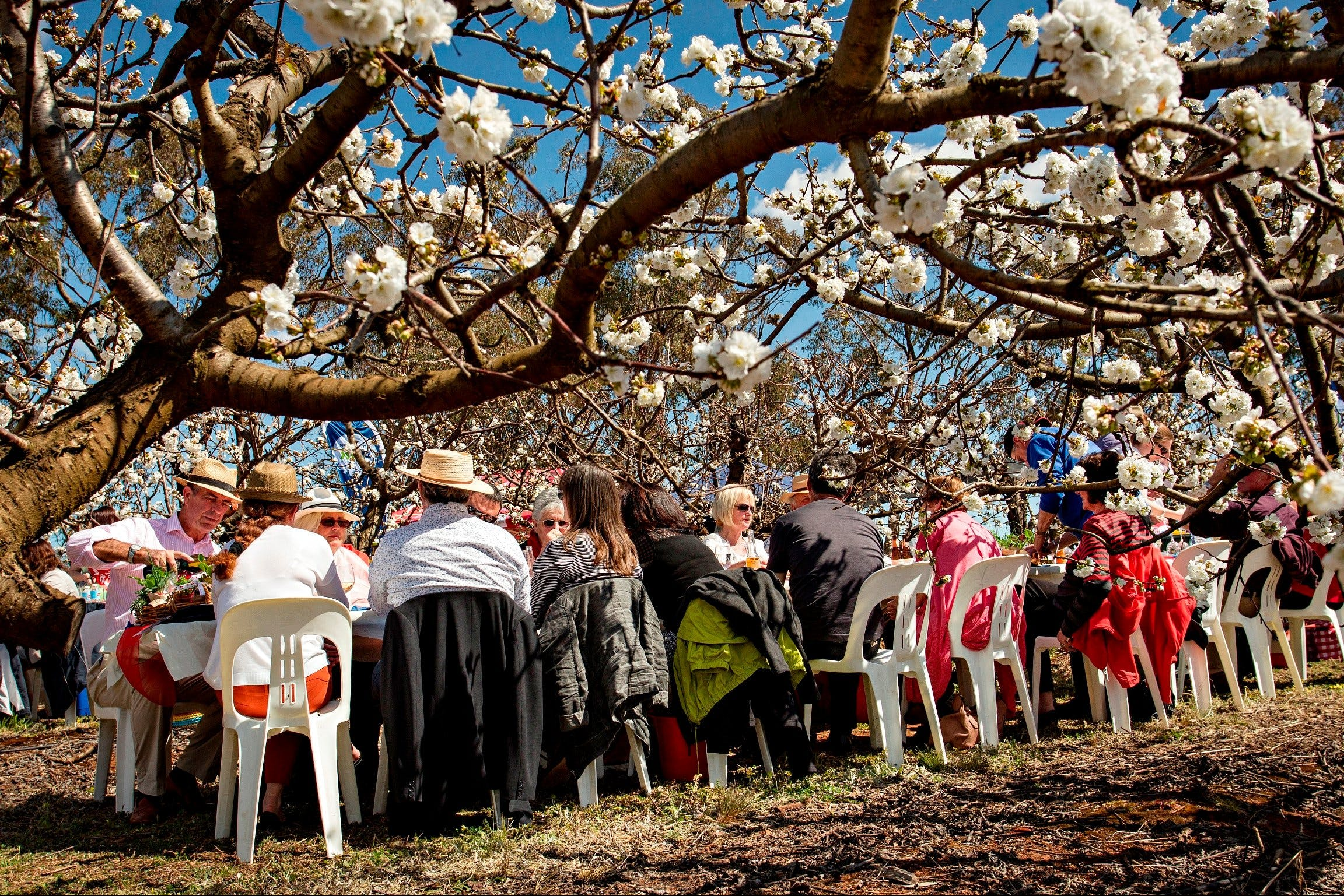 Young Cherry Blossom Long Lazy Lunch - Lennox Head Accommodation