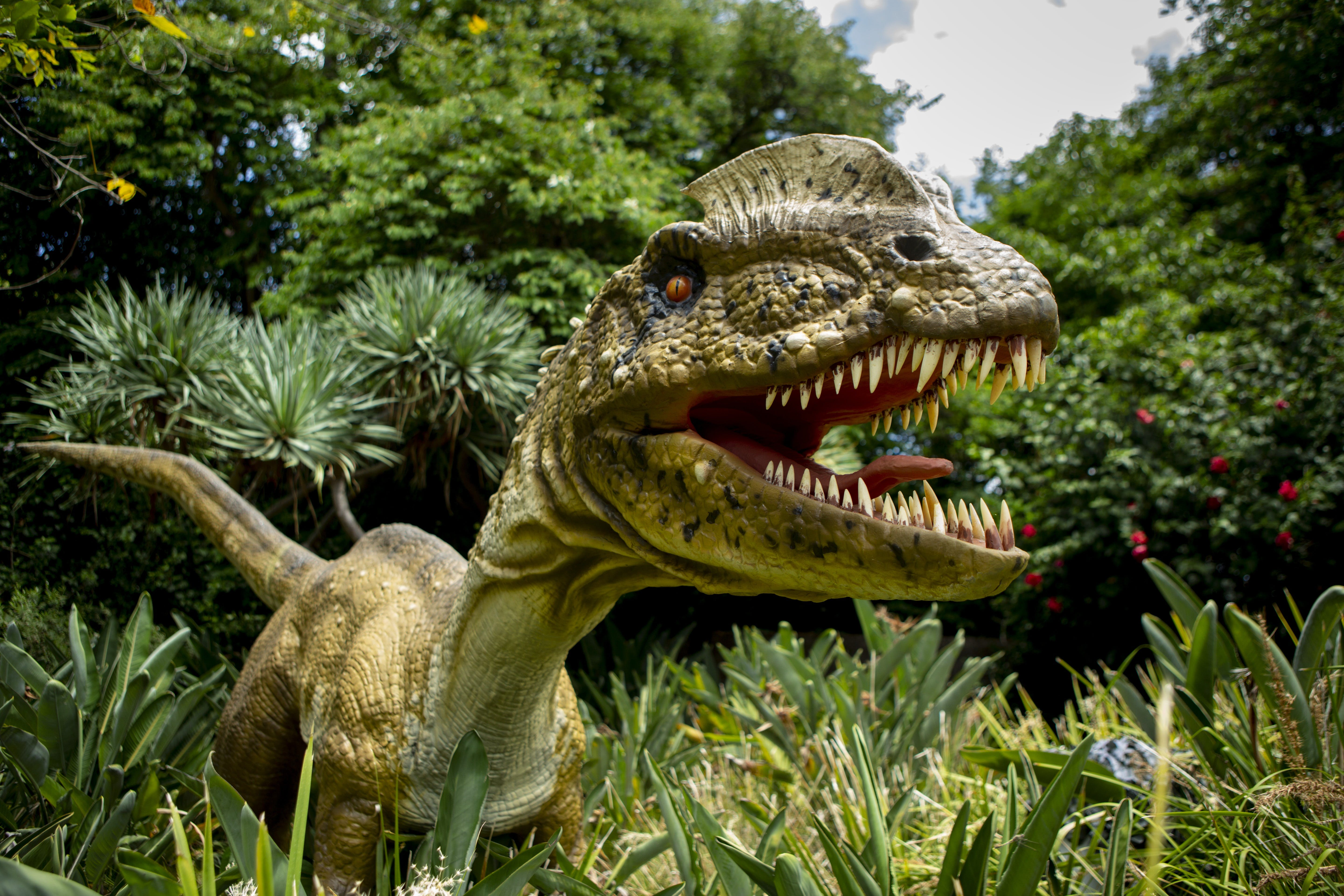 Dino Lab at Melbourne Zoo - Lennox Head Accommodation