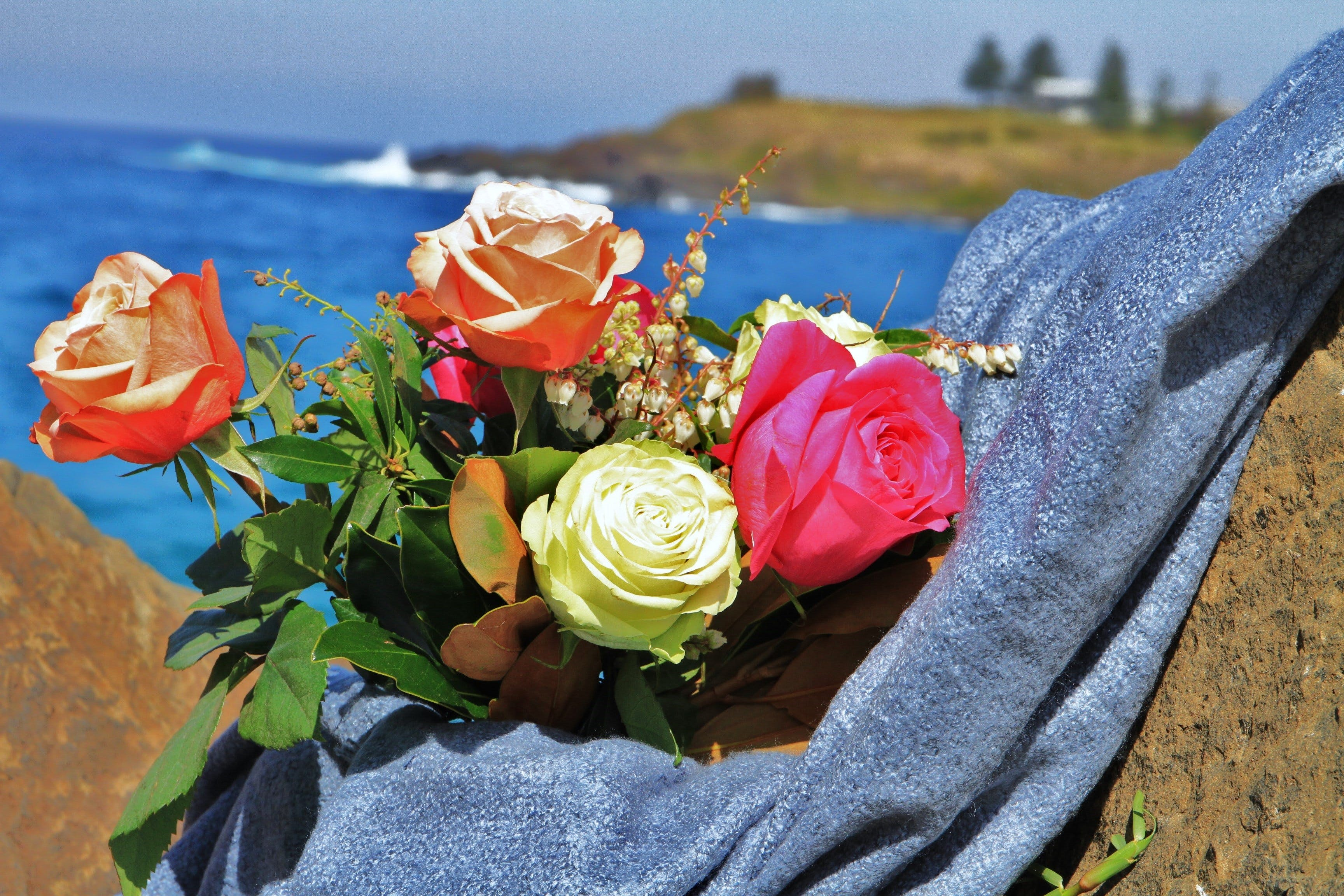 Roses by the Seaside National Rose Championships and Conference - Lennox Head Accommodation