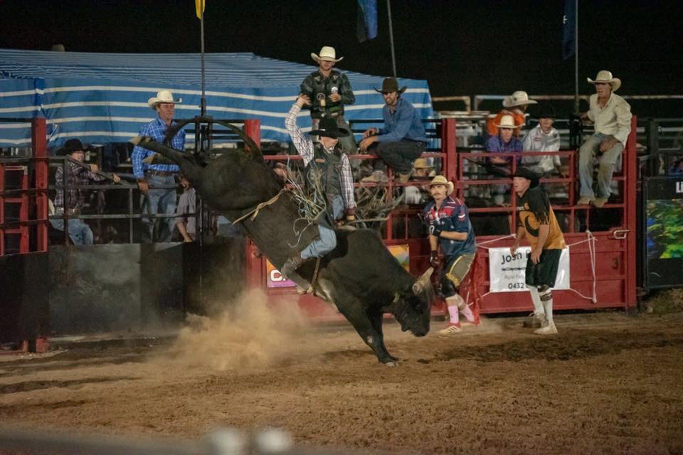 Black Opal Bull and Bronc Ride - Lennox Head Accommodation