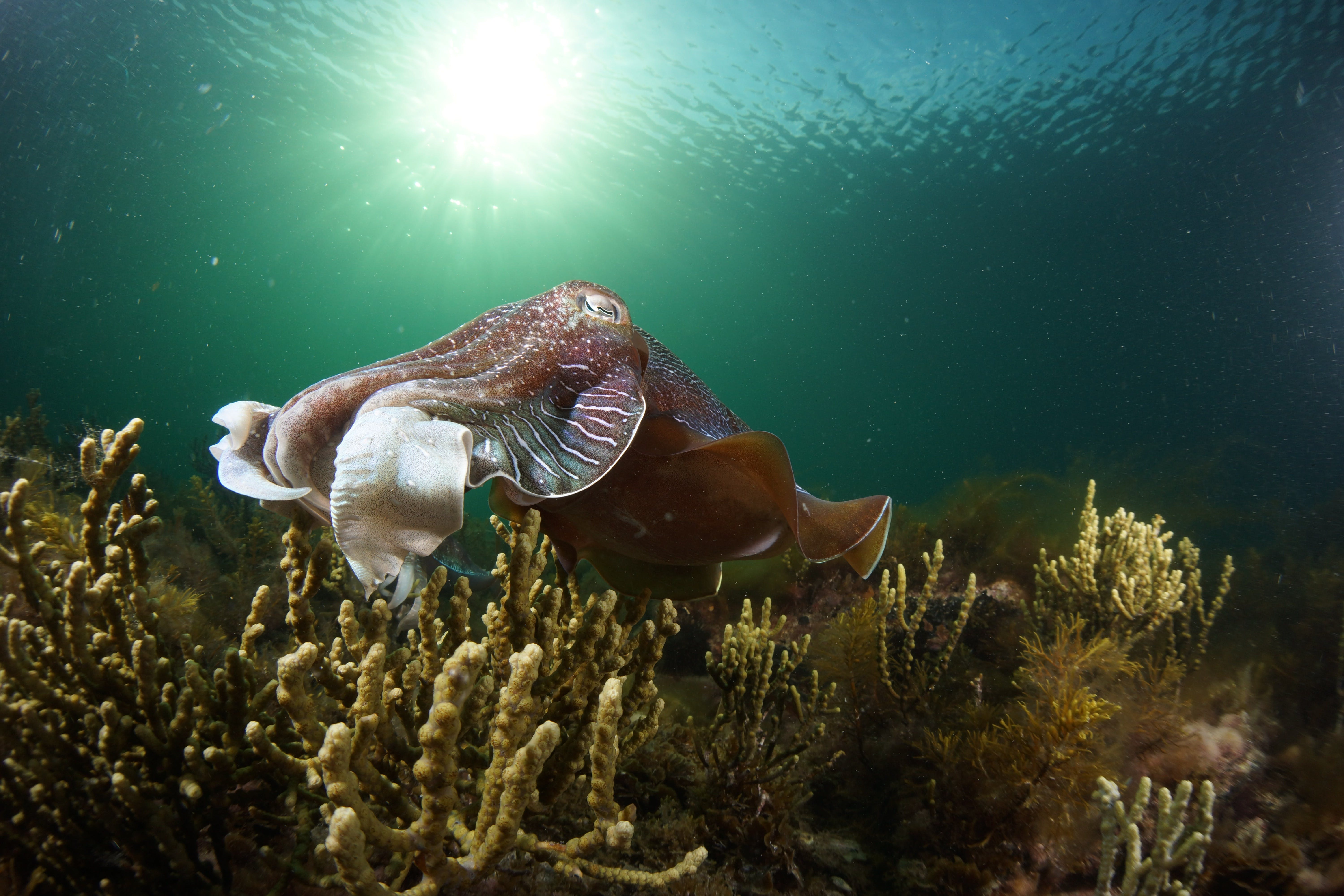 Cuttlefish Diving  Snorkeling EVERYDAY May -August - Lennox Head Accommodation