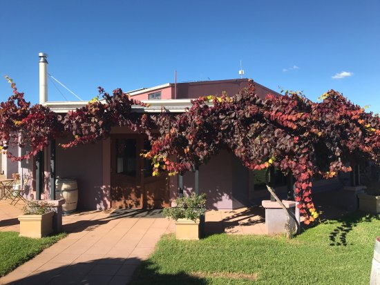 Jester Hill Wines - Lennox Head Accommodation